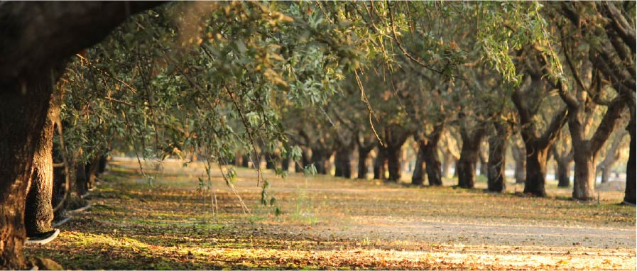 Tree crops ready for harvest